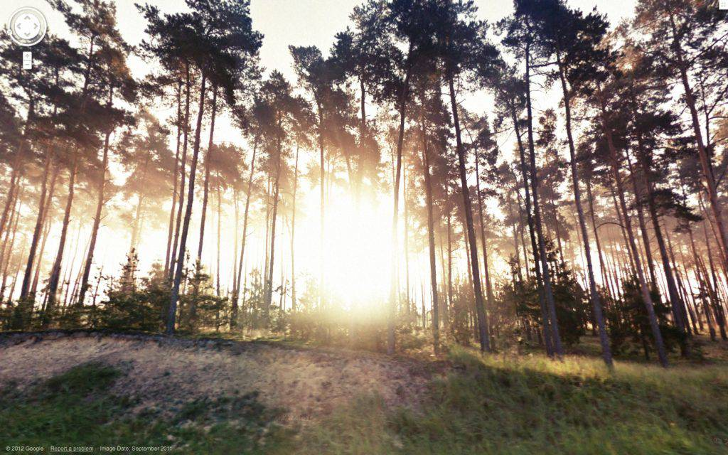 This colour photograph shows a stand of evergreens on the side of a road. Rays of sunshine filtering through the tree trunks create a radiant aura at the centre of the picture.