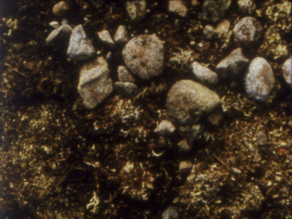 This still frame from the film shows a close-up of earth strewn with grey pebbles.